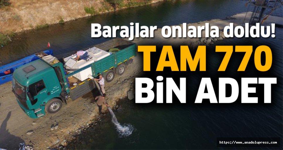 Tam 770 bin adet barajlara…