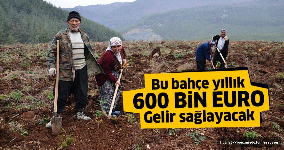 Bahçe kuruldu, yıllık 600 bin Euro gelir sağlayacak
