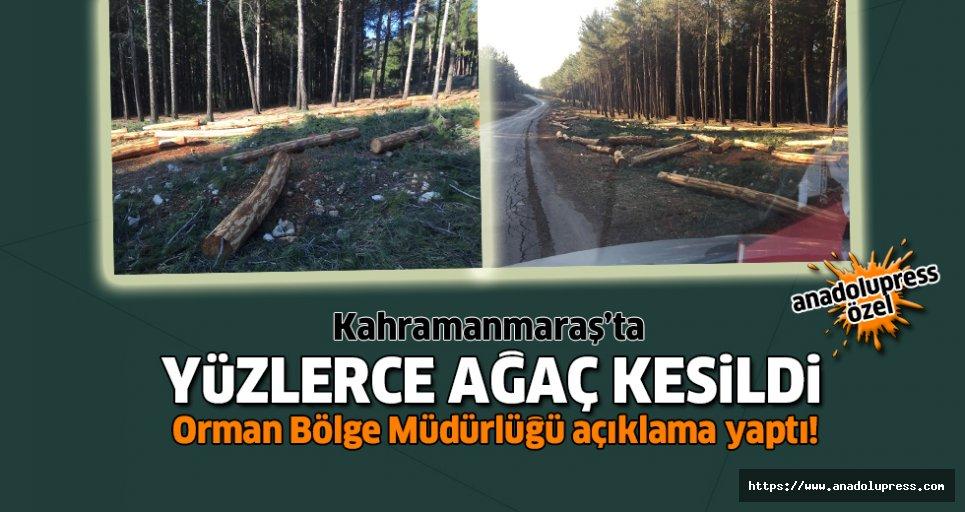 Yüzlerce ağaç kesildi!