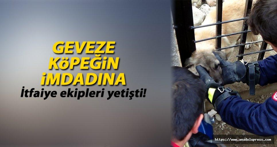 Geveze köpeğin idmanına itfaiye yetişti!