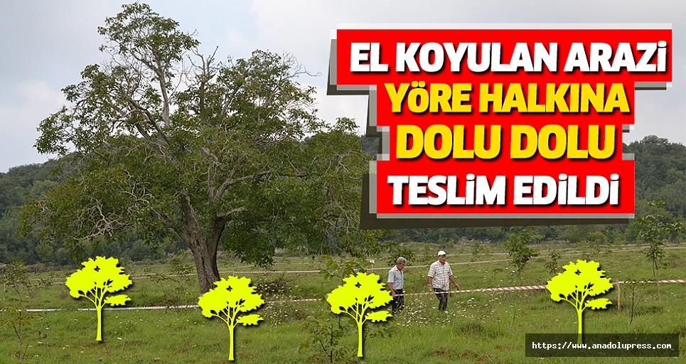 Yıllar Önce El Koyulan Arazi Yöre Halkına Ceviz Ağaçları İle Teslim Edildi