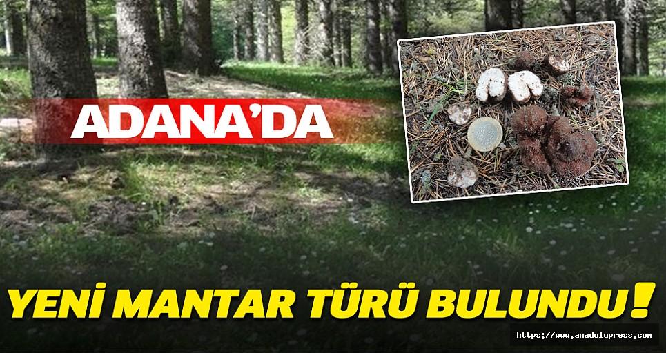 Adana'da Yeni Mantar Türü Bulundu