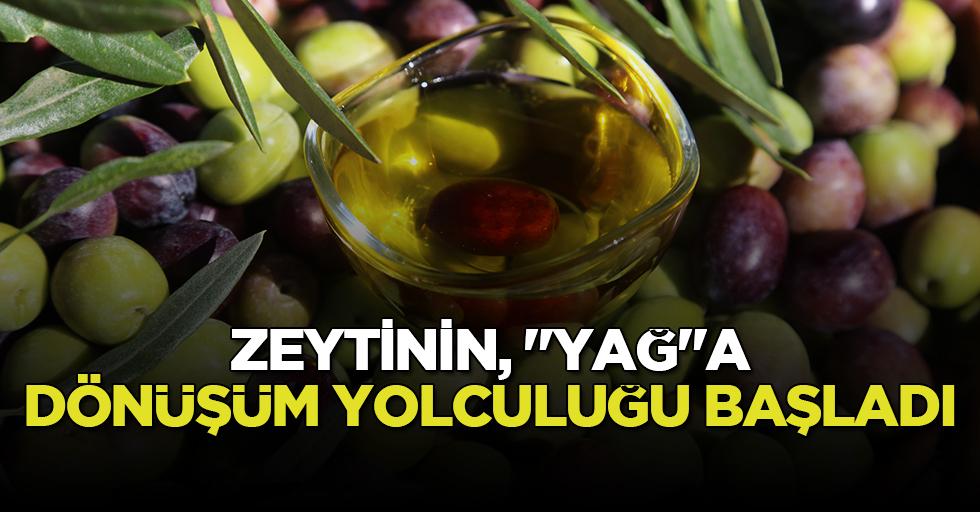 """Zeytinin, """"Yağ""""a dönüşüm yolculuğu başladı!"""