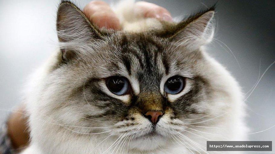 İnternet Dolandırıcılarının Yeni Hedefi Hayvanseverler