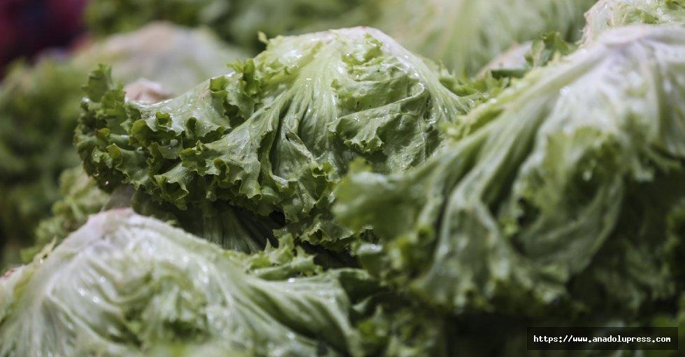 Şubatta en fazla Kıvırcık Salata fiyatı arttı