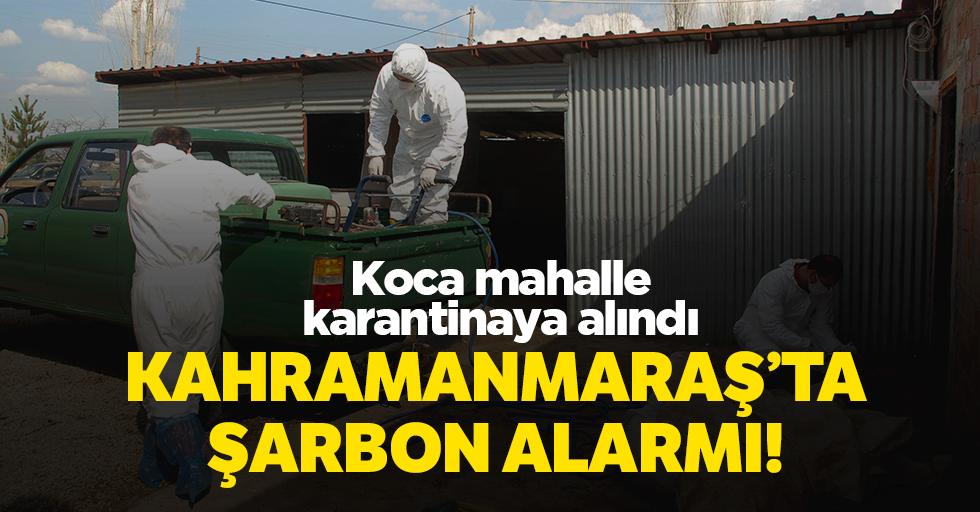 Kahramanmaraş'ta şarbon alarmı!