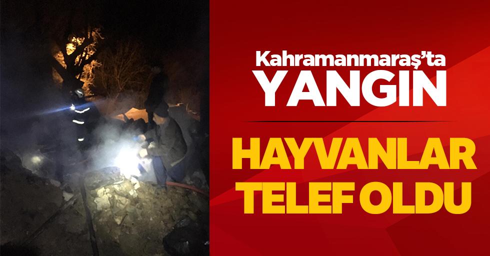 Kahramanmaraş'taki yangında hayvanlar telef oldu!