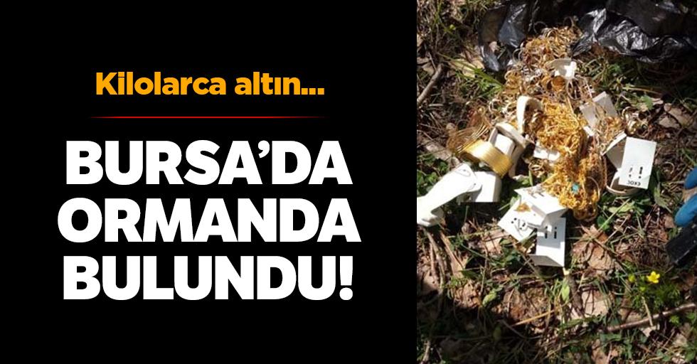 Kilolarcaaltın ormanda bulundu!