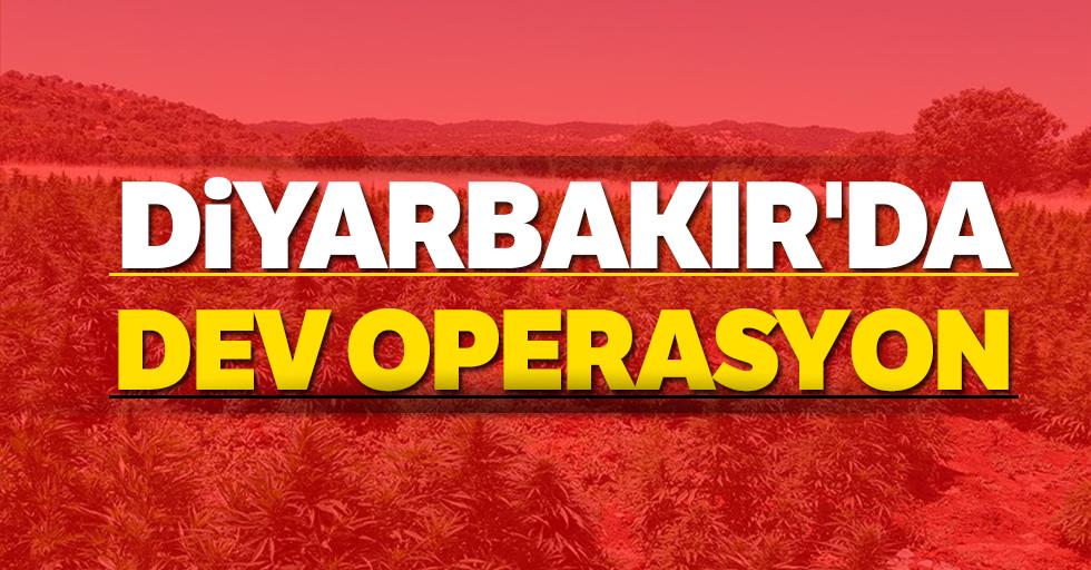 Diyarbakır'da 5 milyon 430 bin 704 kök Hint keneviri ele geçirildi
