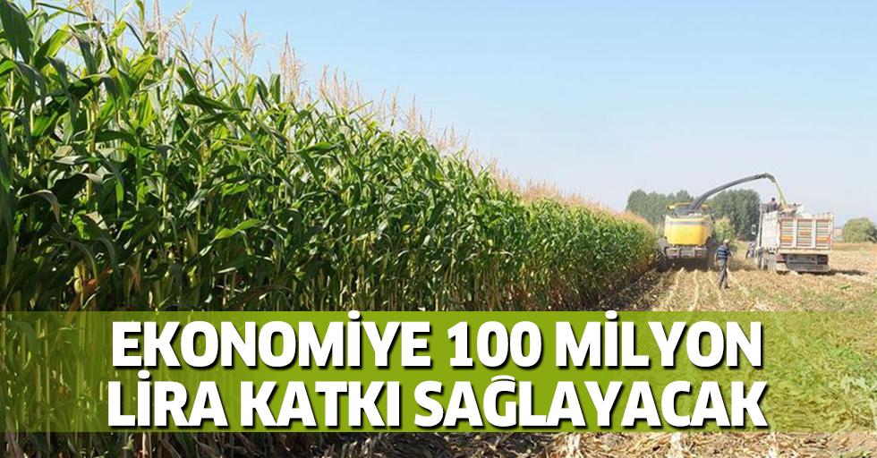Yeni geliştirilen silajlık mısır ekonomiye 100 milyon lira katkı sağlayacak