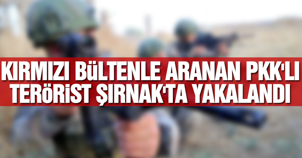 Kırmızı bültenle aranan PKK'lı terörist Şırnak'ta yakalandı