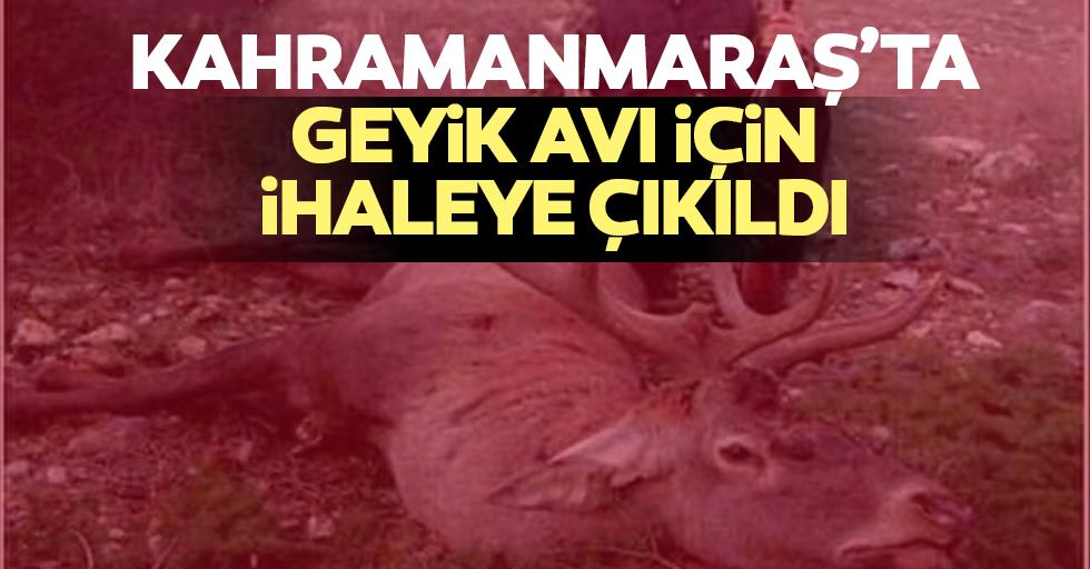 Kahramanmaraş'ta geyik avı için ihaleye çıkıldı