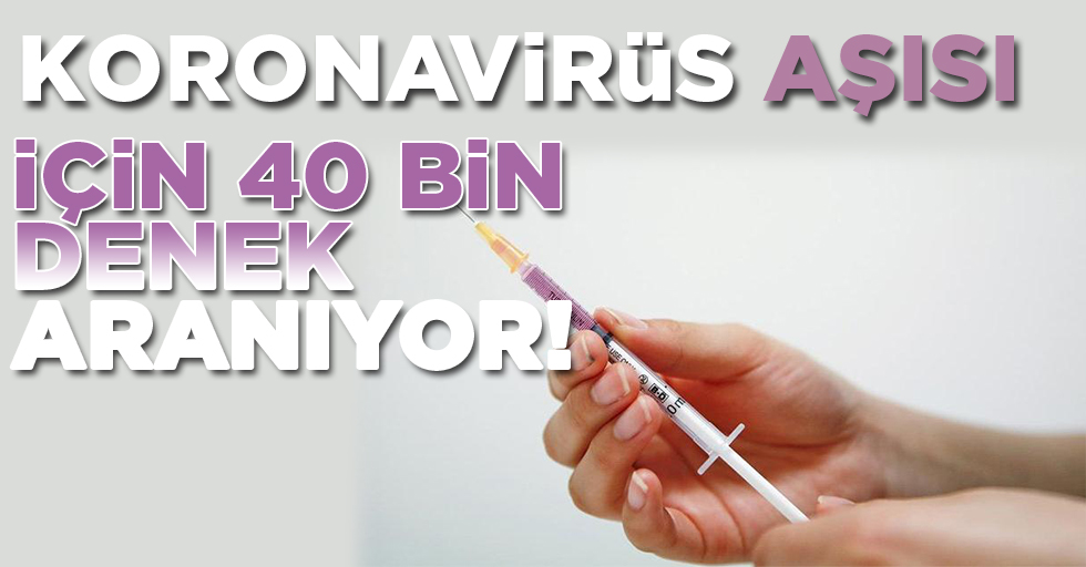 Koronavirüs aşısı için 40 bin denek aranıyor!