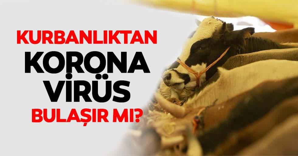 Kurbanlıktan koronavirüs bulaşır mı?