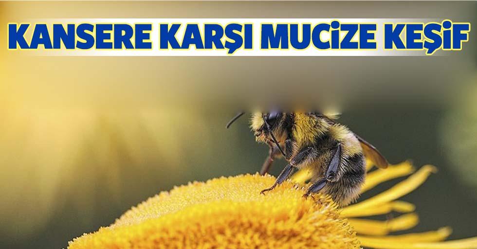 Bal arısının zehri laboratuvarda meme kanseri hücrelerini bir saat içinde öldürdü