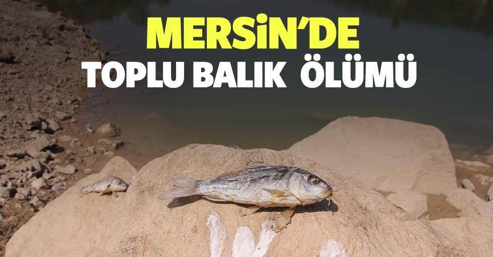 Mersin'de toplu balık ölümü