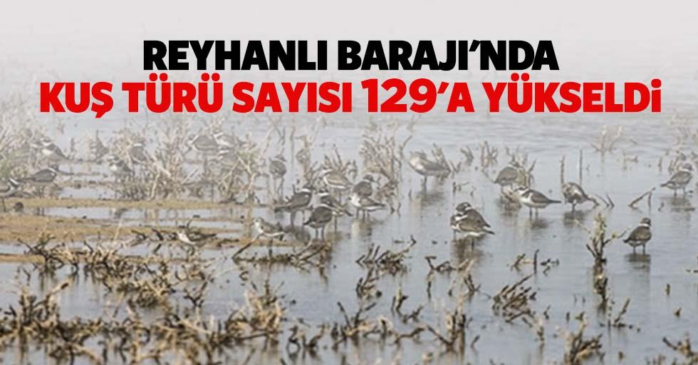 Reyhanlı barajı'nda kuş türü sayısı 129'a yükseldi