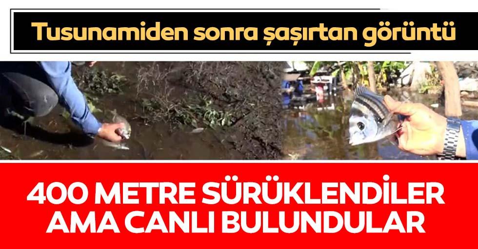İzmir'de tsunami sonrası şaşırtan görüntü!