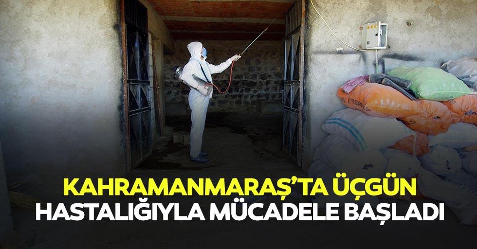 Kahramanmaraş'ta üçgün hastalığıyla mücadele başladı
