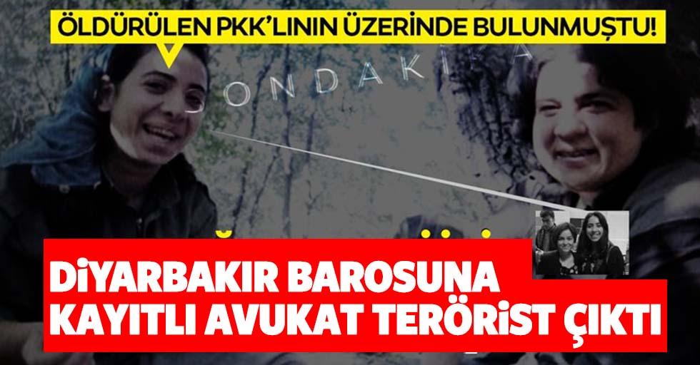 Öldürülen PKK'lı yöneticinin üzerinden çıkan fotoğraf şoke etti; İşte terörist çıkan avukat