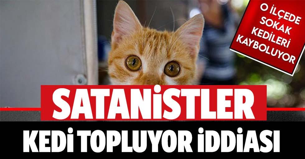 21 Aralık öncesi sokak kedilerinin ortadan kaybolması satanizm iddialarını gündeme getirdi