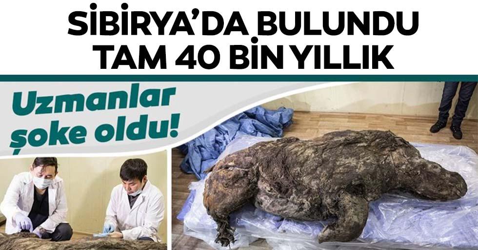 Sibirya'da bulundu! 40 bin yıldır bozulmamış