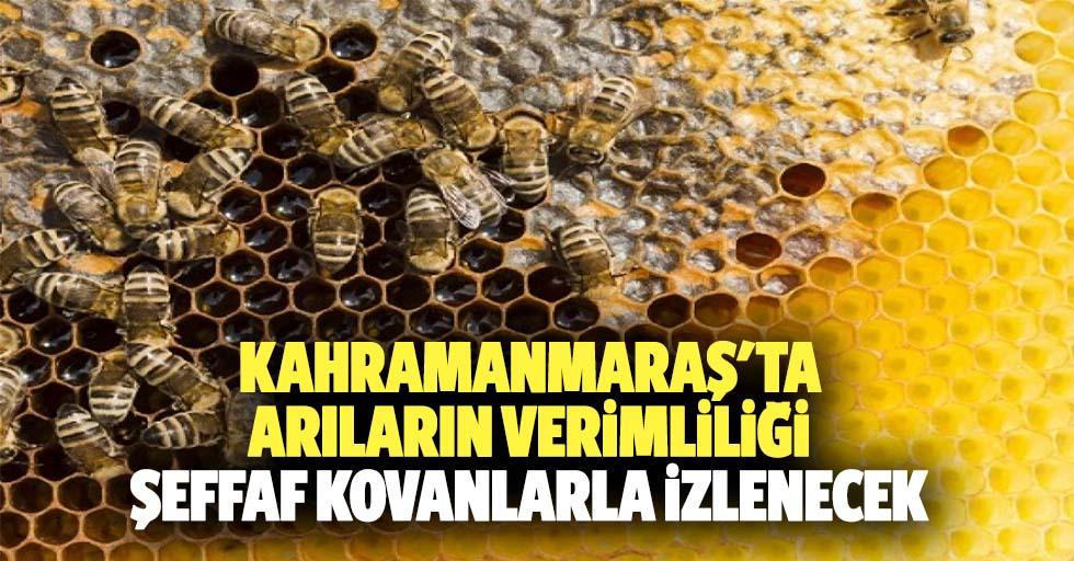 Kahramanmaraş'ta arıların verimliliği şeffaf kovanlarla izlenecek