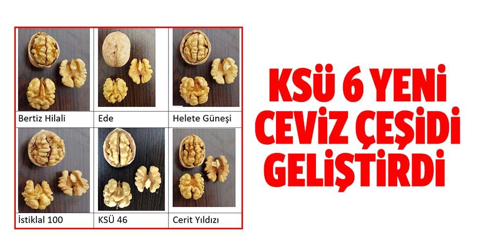 KSÜ 6 yeni ceviz çeşidi geliştirdi