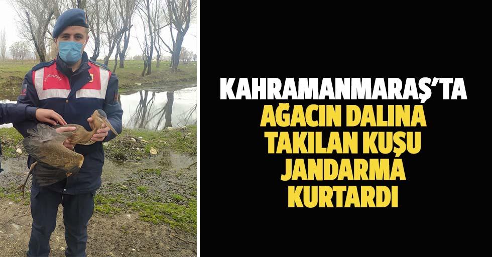 Kahramanmaraş'ta ağacın dalına takılan kuşu jandarma kurtardı