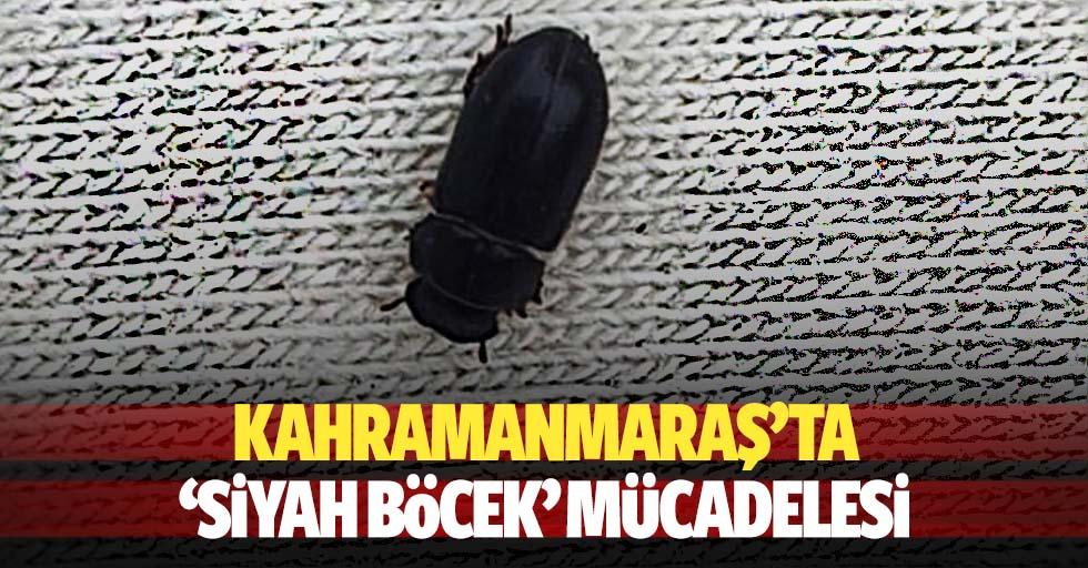 Kahramanmaraş'ta 'siyah böcek' mücadelesi