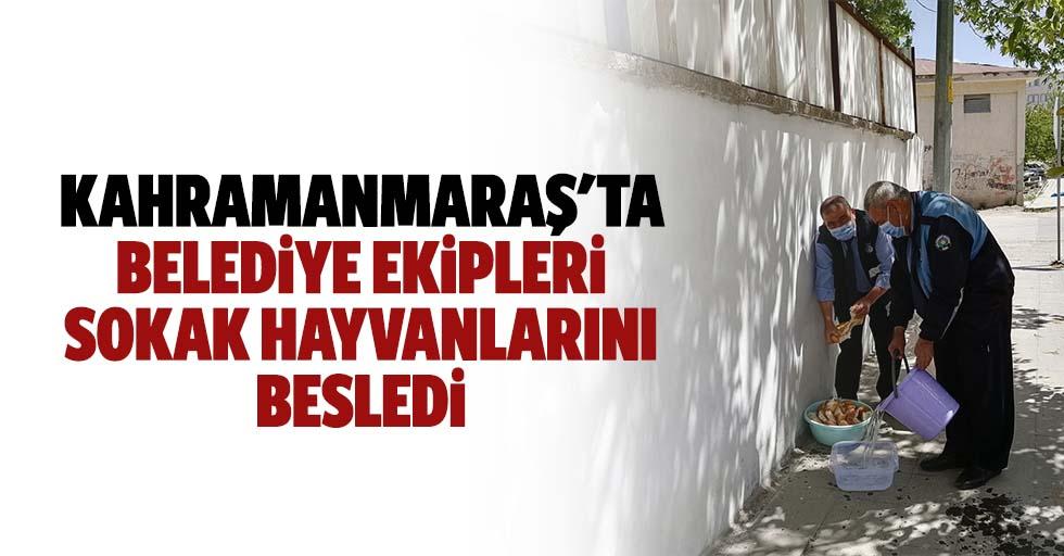 Kahramanmaraş'ta belediye ekipleri sokak hayvanlarını besledi