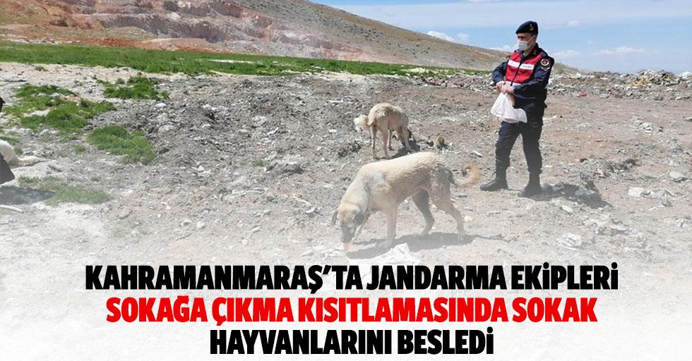 Kahramanmaraş'ta jandarma ekipleri sokağa çıkma kısıtlamasında sokak hayvanlarını besledi