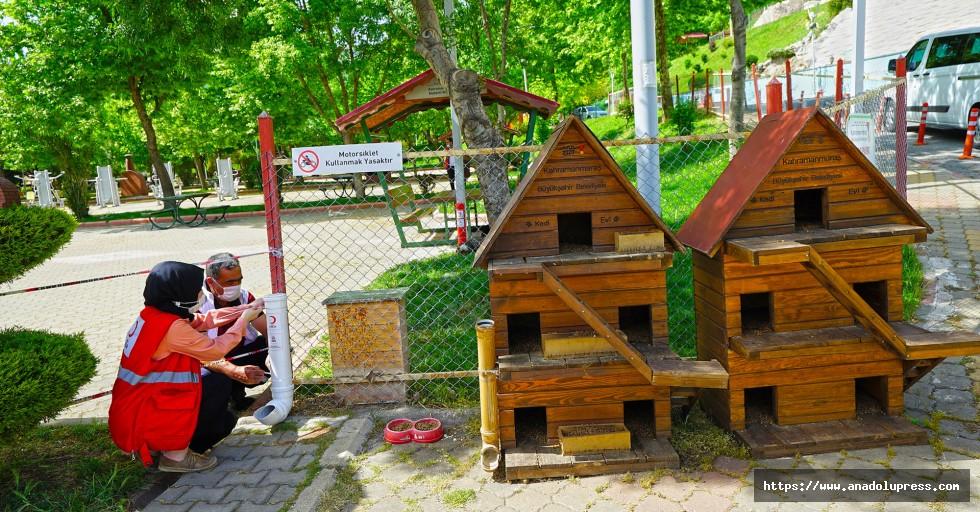 Kahramanmaraş'ta sokak hayvanlarına mama