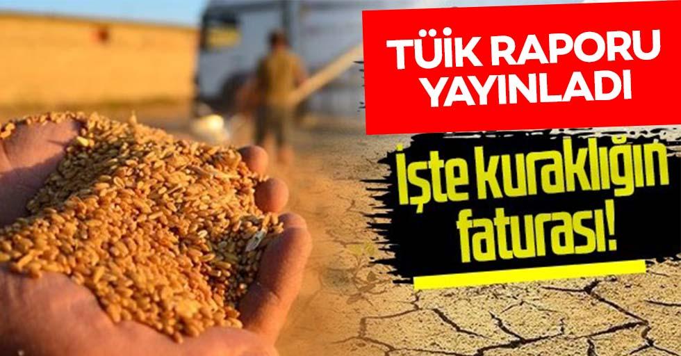Türkiye'nin kuraklık faturası belli oldu! İşte beklenen hasat kayıpları