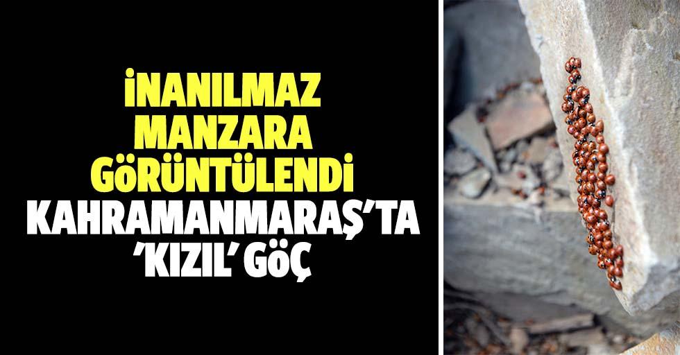 İnanılmaz manzara görüntülendi, Kahramanmaraş'ta 'kızıl' göç