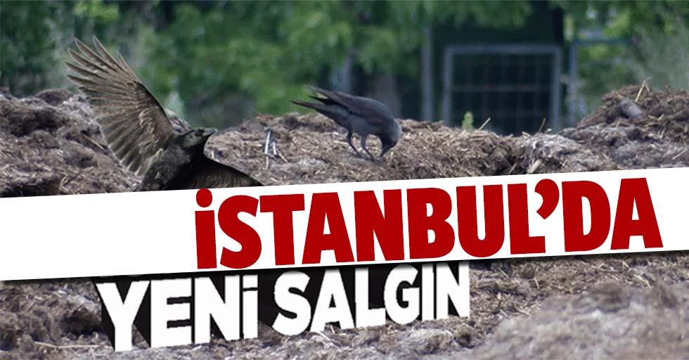 İstanbul'da Batı Nil Virüsü tespit edildi!