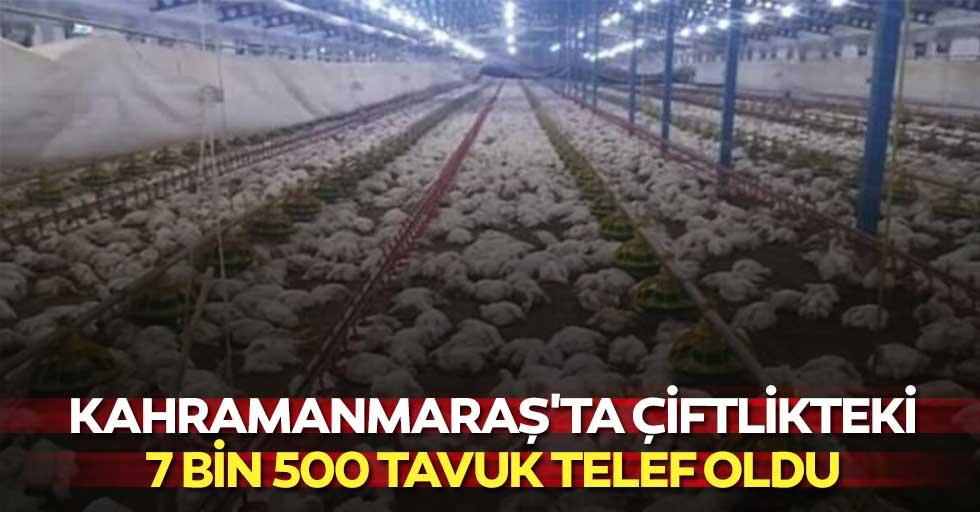 Kahramanmaraş'ta çiftlikteki 7 bin 500 tavuk telef oldu