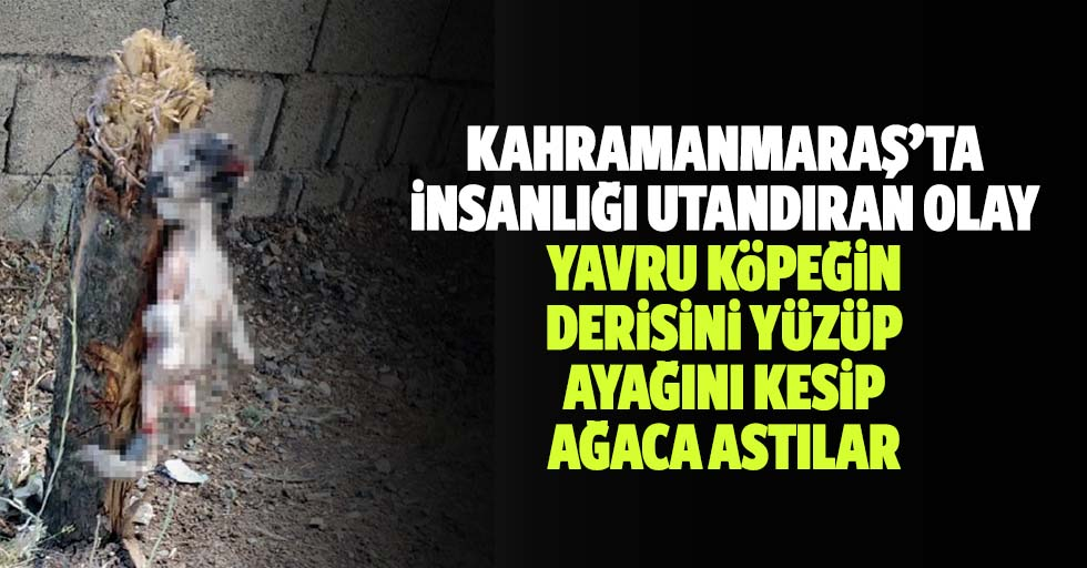 Kahramanmaraş'ta İnsanlığı Utandıran Olay, Yavru Köpeğin Derisini Yüzüp Ayağını Kesip, Ağaca Astılar