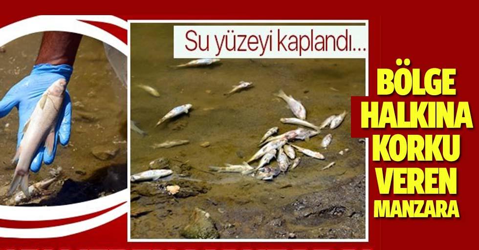 Karasu Nehri'nde bölge halkını korkutan olay