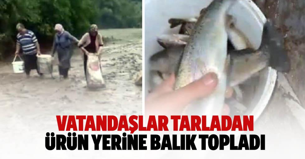 Vatandaşlar tarladan ürün yerine balık topladı