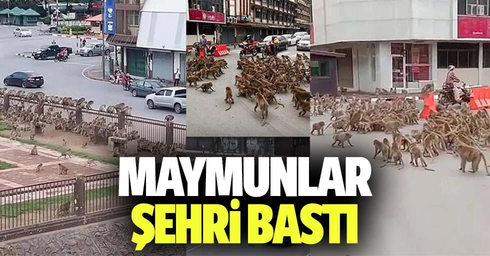 Maymunlar şehri bastı