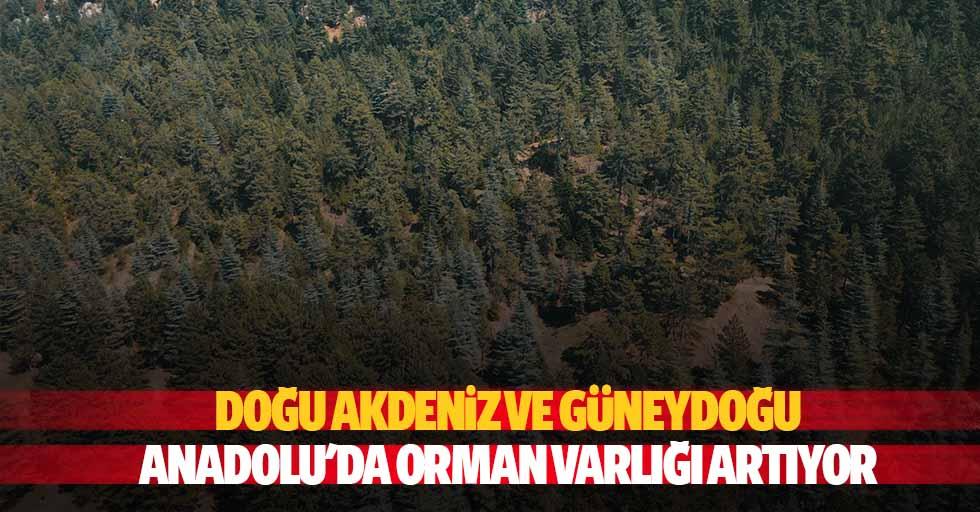 Doğu Akdeniz ve Güneydoğu Anadolu'da Orman Varlığı Artıyor