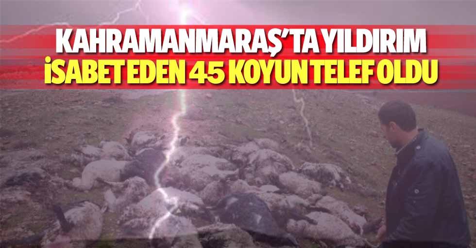 Kahramanmaraş'ta yıldırım isabet eden 45 koyun telef oldu