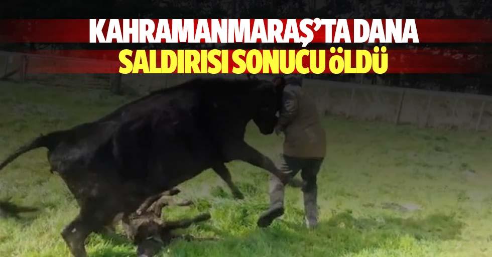 Kahramanmaraş'ta Dana Saldırısı Sonucu Öldü