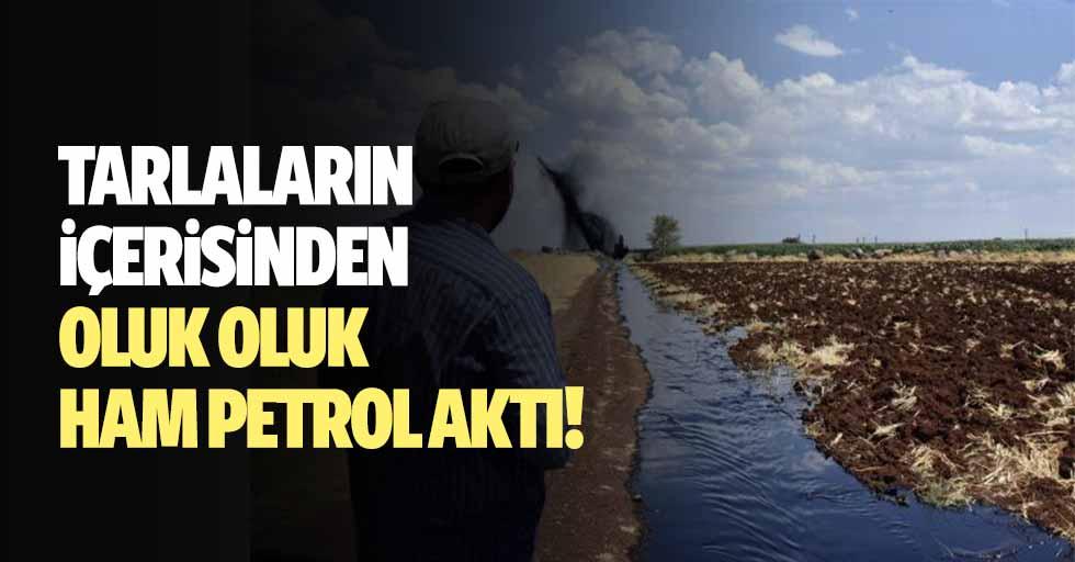 Tarlaların içerisinden oluk oluk ham petrol aktı