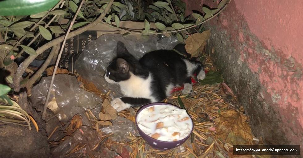 Kahramanmaraş'ta Kediye Şefkat Eli