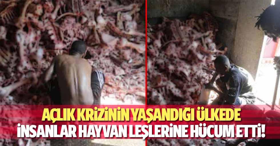 Açlık krizinin yaşandığı ülkede insanlar hayvan leşlerine hücum etti!