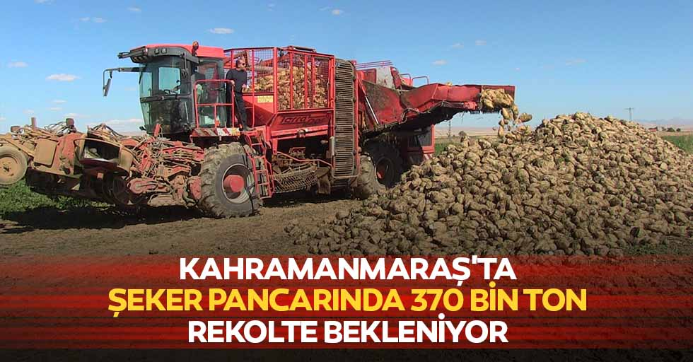 Kahramanmaraş'ta şeker pancarında 370 bin ton rekolte bekleniyor