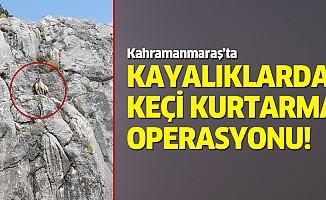 Kayalıklarda keçi kurtarma operasyonu!