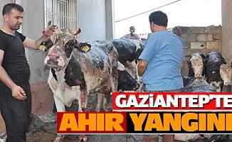Gaziantep'te Ahır Yangını